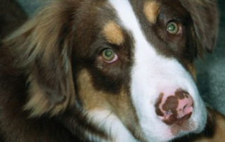dog has pink spots on nose