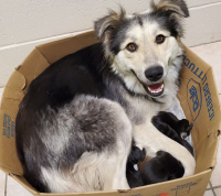abandoned mother dog and her puppies