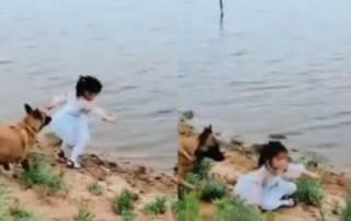 dog saves a girl from falling into water