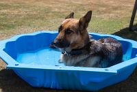 keep your dog cool during summer