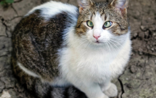 olive oil for cats benefits